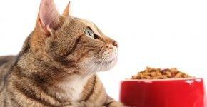 Кошка не ест сухой корм