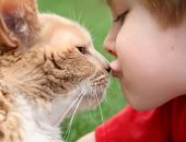 Целуют кошку