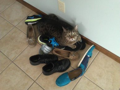 Кошка лежит на обуви