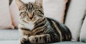 Кот метит