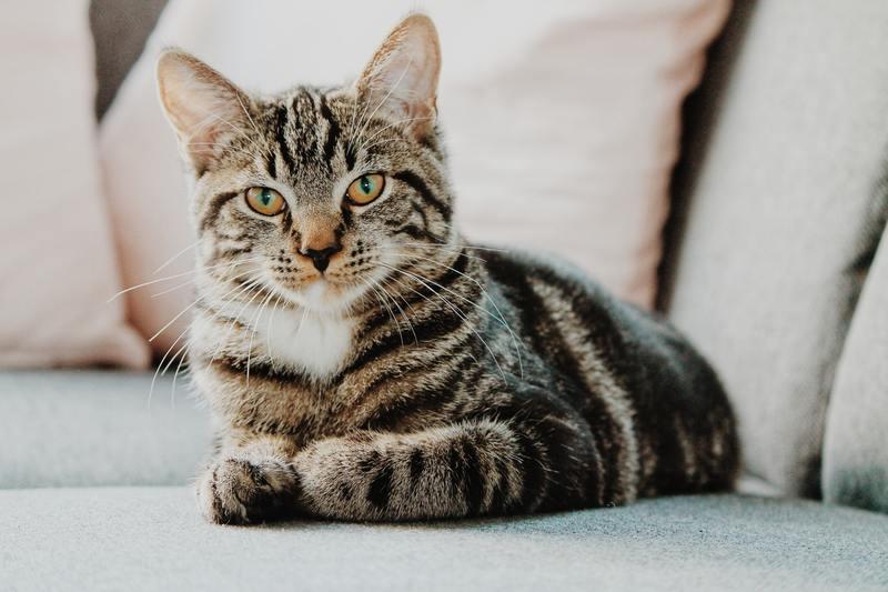 Как отучить кота метить территорию в квартире или доме