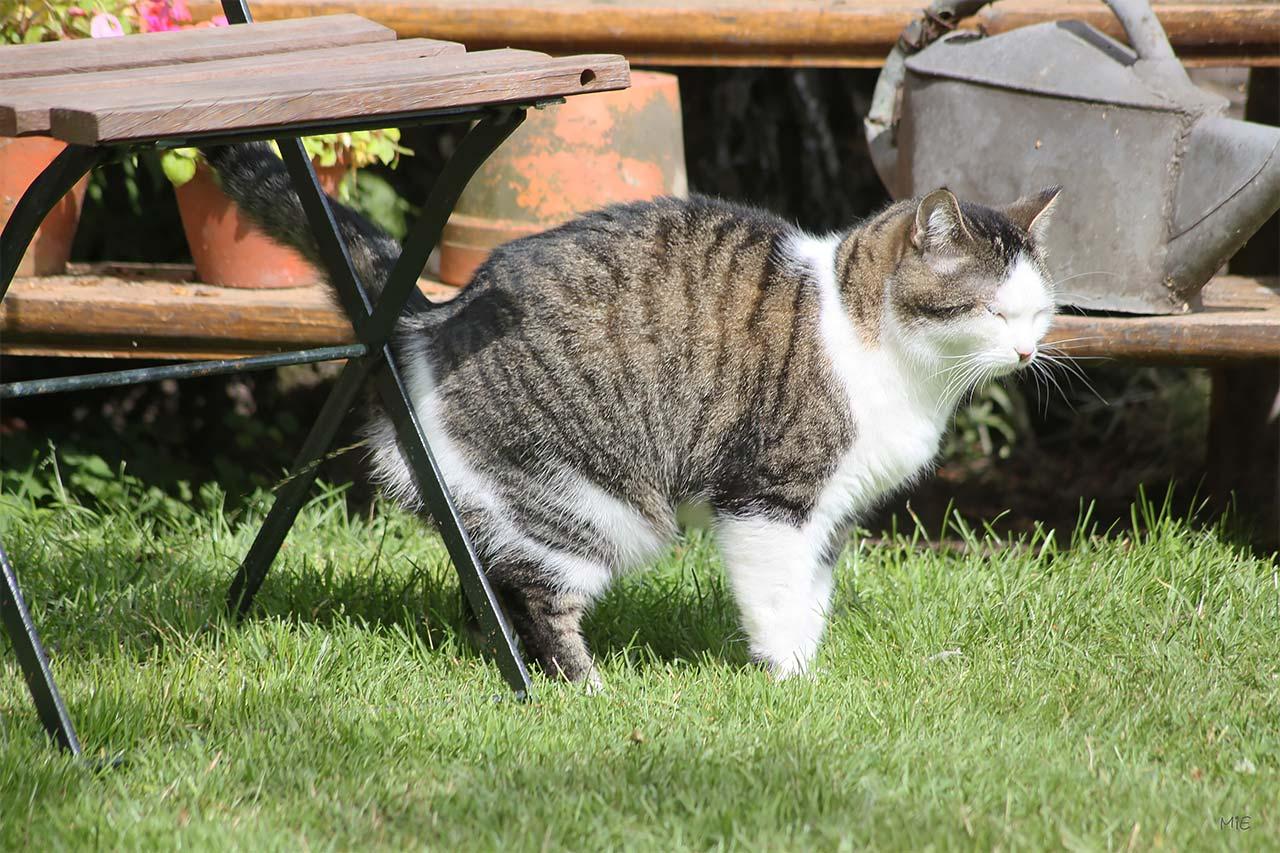 Картинки котов которые метят