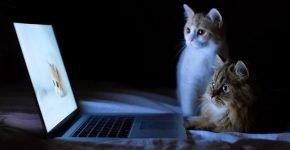Кошка и компьютер