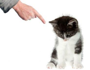 Ругание кота