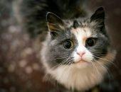 кошка говорит