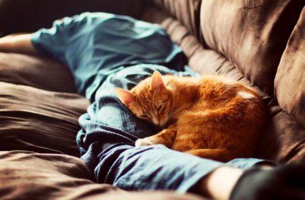 Кошка спит на хозяине
