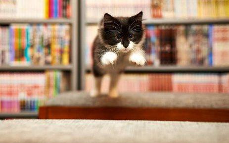 Кошка прыгает