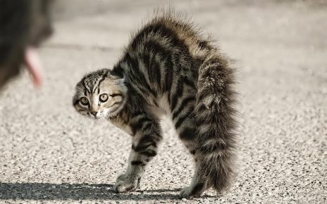 Котёнок выгнул спину