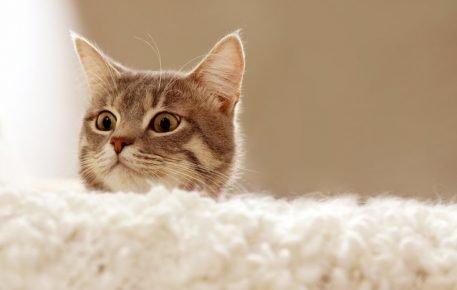 Кошка выглядывает из-за дивана