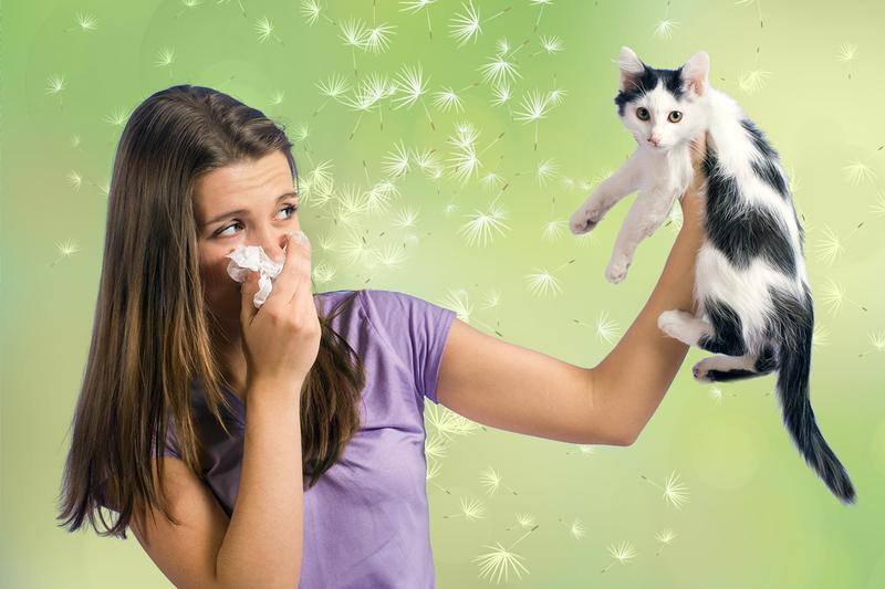 Почему у людей аллергия на кошек