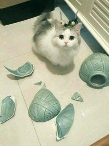 Кот сбросил вазу