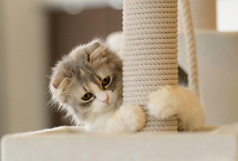 Воспитание котов до года