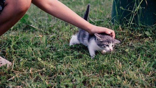 Ребенок гладит котёнка