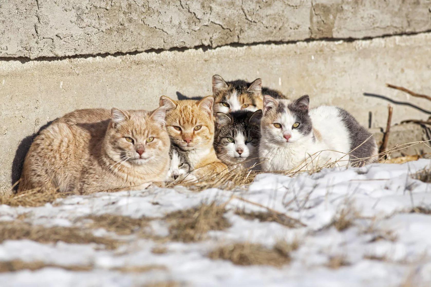 фото с бездомными кошками для ресторанов чаще