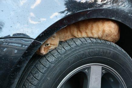 Кот прячется под крылом машины