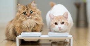 Норма еды кошке на день