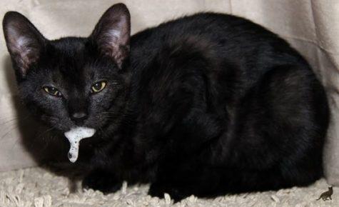 Слюнотечение в виде пены у кошки