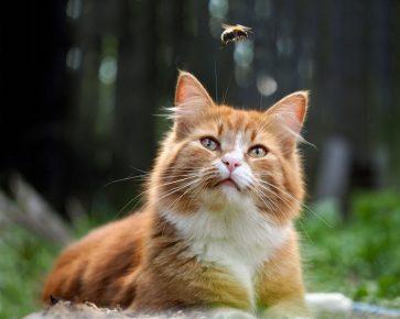 Кот и шмель