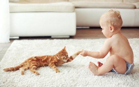 Кошка играет с малышом