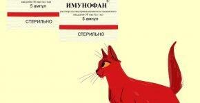 Иммунофан и кошка
