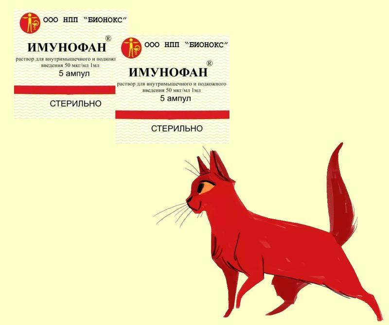 Препарат Имунофан для кошек: описание, инструкция по применению для животных, отзывы