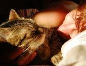Кошка спит в постели с человеком