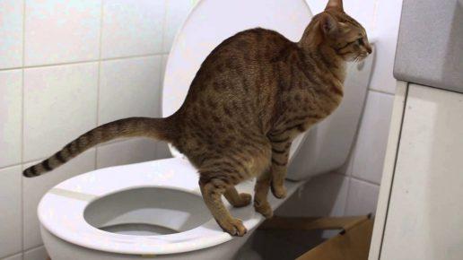 Кот ходит на унитаз