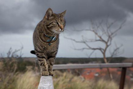 Кот идет по забору