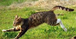 Отпугиватель кота