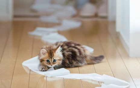 Котёнок проказничает