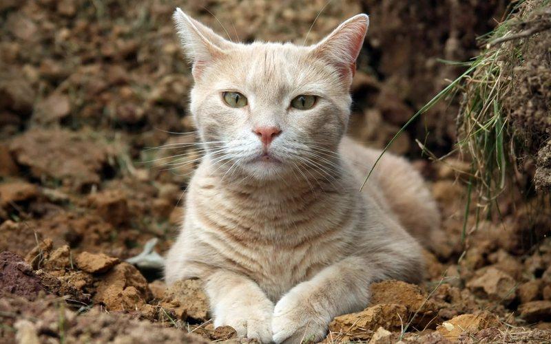 У кошки на подбородке черные точки причины возникновения и лечение