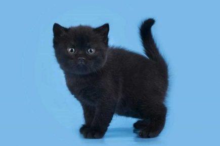 Маленький чёрный котёнок