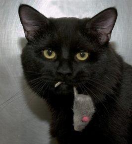 Чёрный кот с игрушкой