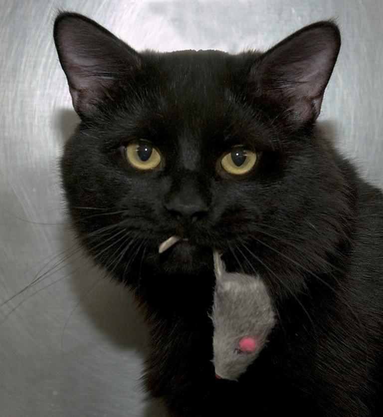 Прикольные картинки с черными кошками