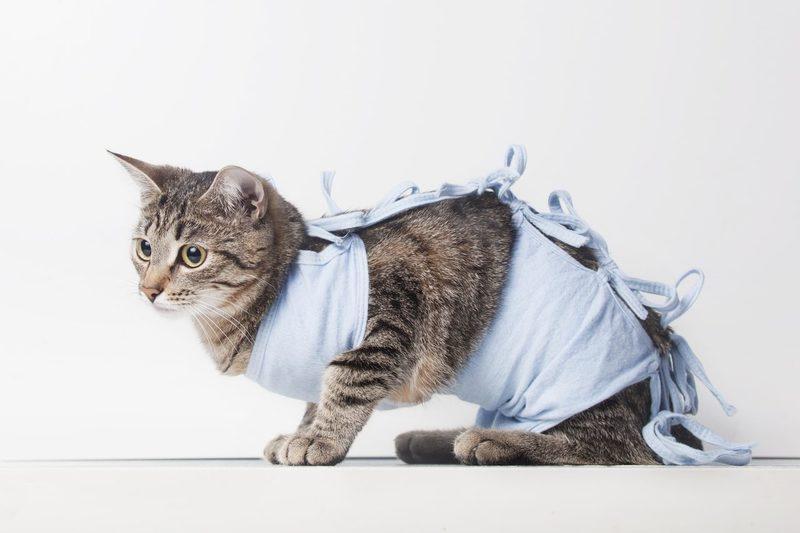 Стерилизация кошки на дому лапароскопическим методом