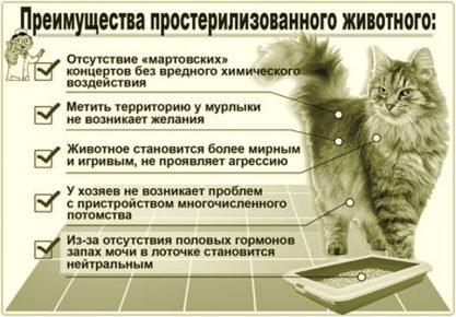 Плюсы кастрации животных