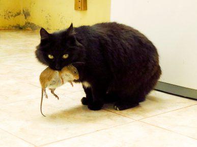 Кот с добычей