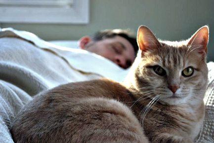 Кот рядом со спящим человеком