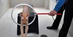 кот прыгает через обруч