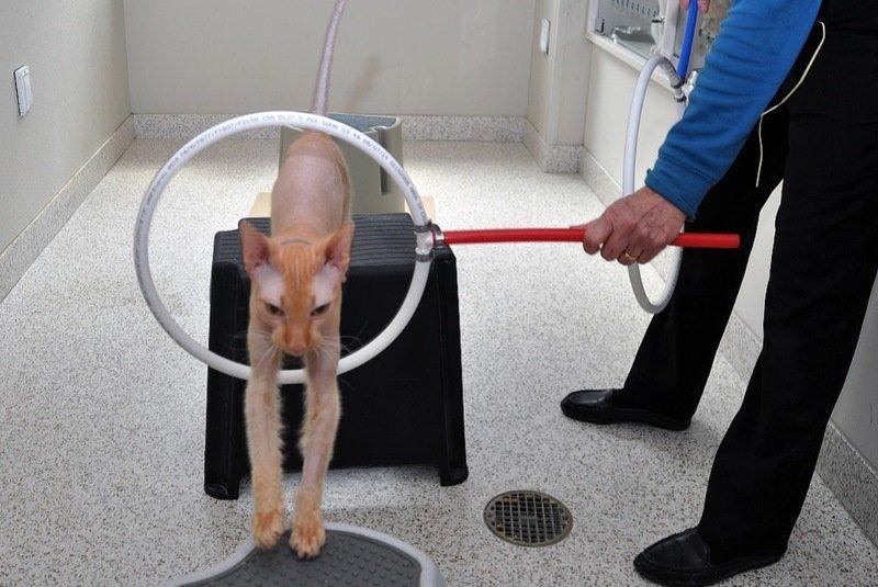 Как дрессировать котенка в домашних условиях
