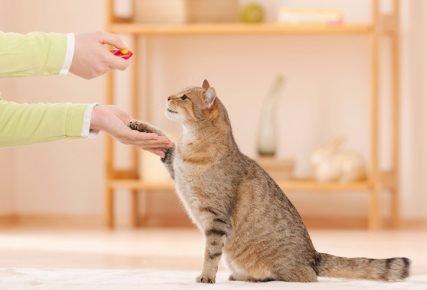 Кошка подаёт человеку правую лапу
