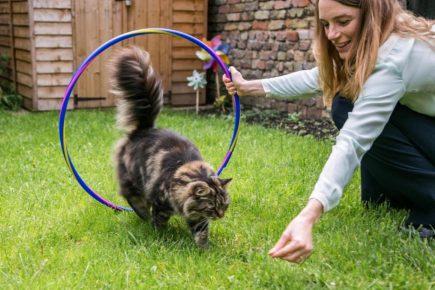 Девушка учит кота прыгать через обруч