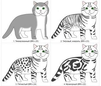 Виды рисунка шерсти у кошек