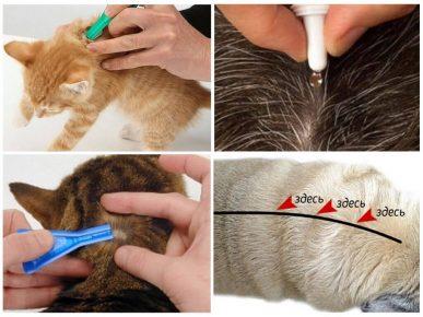 Нанесение капель кошке