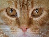 кошка с больными глазами