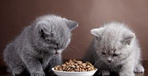 Котёнок ест сухой корм