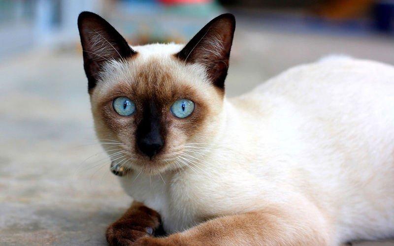 Антигистаминные при аллергии на кошек