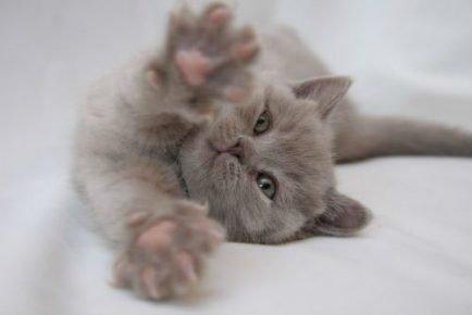 Лиловый котёнок