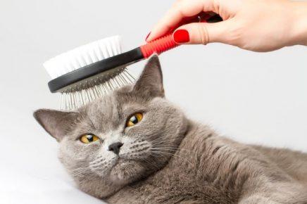 Расчёска для кота