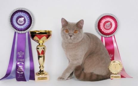 Лиловая британка с наградами